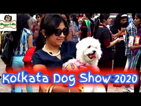 dog-show-kolkata-|-kci-dog-show-|-calcutta-kennel-club-dog-show-2020