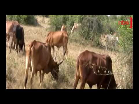 App To Detect Livestock Diseases