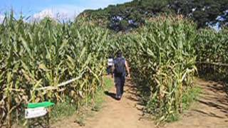 Uncle Shuck's Corn Maze Happy Fall Y'all
