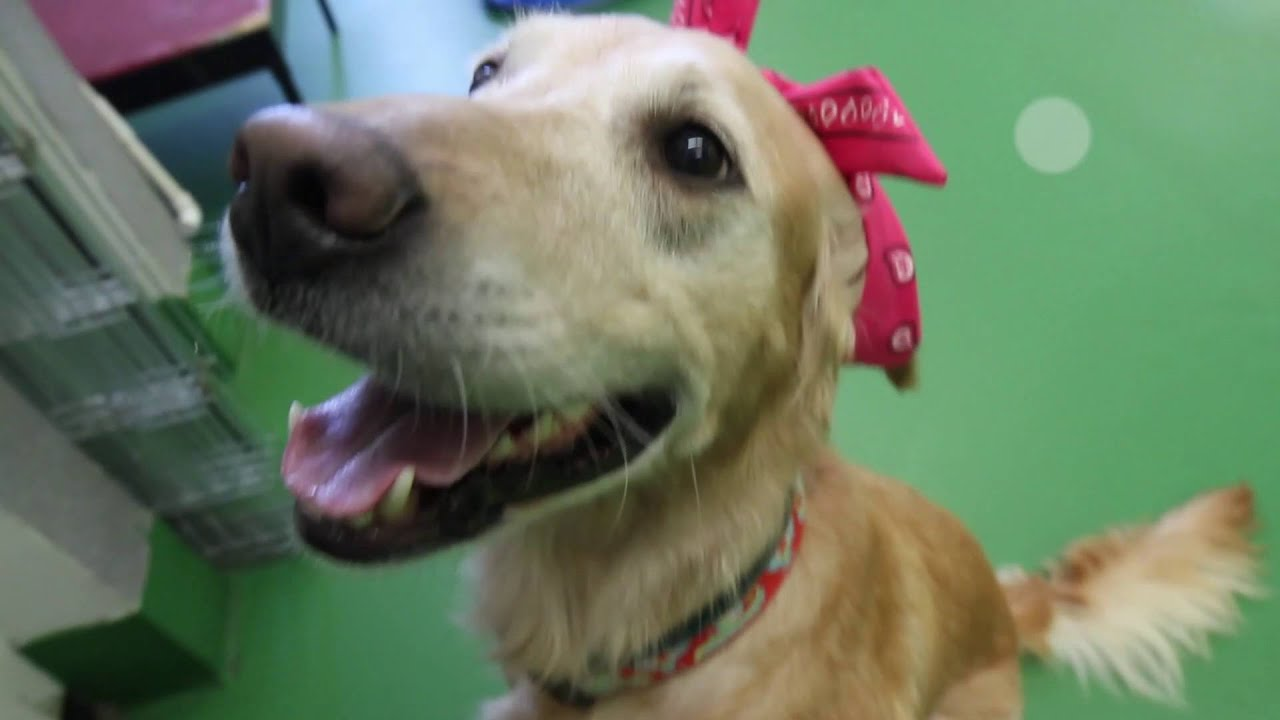 Calgary Humane Society Dogs Whip and Nae Nae