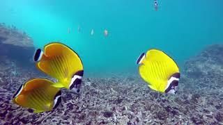 Аквариум кораллового рифа HD 1080P