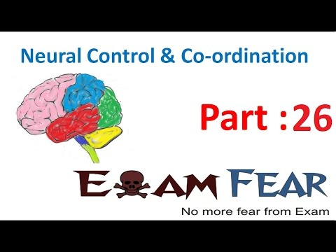 Biology Neural Control & Coordination part 26 (Inner ear, structure of cochlea) CBSE class 11 XI