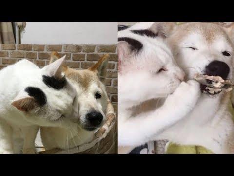 Cagnolina di 18 anni soffocherebbe di notte se non fosse per il gatto. Incredibile!