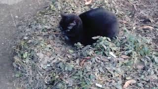Черный кот с очень зелеными глазами # Black cat with very green eyes