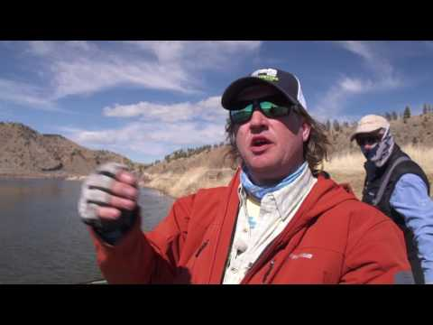 Missouri River Trout | Head Hunters Fly Shop