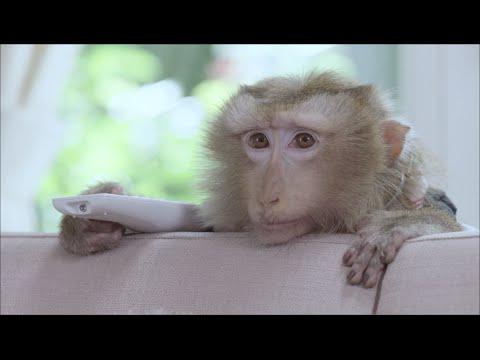 เปิดโปง!! ความลับของน้องลิง