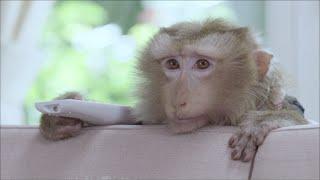 Repeat youtube video เปิดโปง!! ความลับของน้องลิง