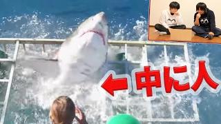 【衝撃映像】海外YouTuberの動画みてみたらヤバすぎた thumbnail