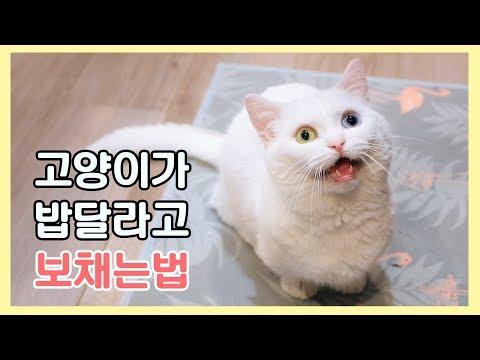고양이가 밥 달라고 보채는 방법 😍 소리파 vs 행동파