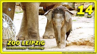 🔴 Elefantenkalb, Don Chung & Rani • Zoo Leipzig / Travel, слоновый, Animals