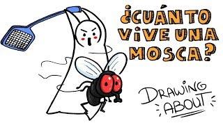 ¿CUÁNTO VIVE UNA MOSCA? | Draw My Life