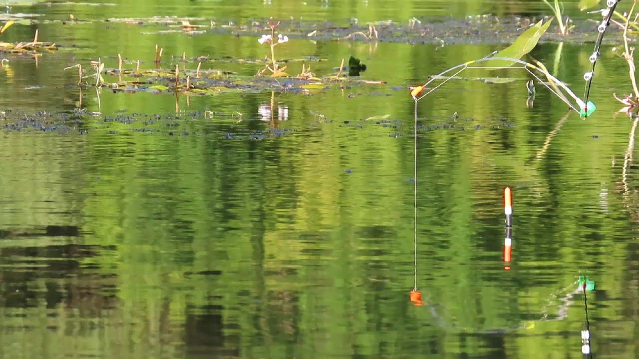 Карась на ЭФИРНУЮ ЛАВАНДУ | ловля на карася в августе на поплавок и боковой кивок