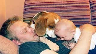 Beagle Dog Meets Newborn Baby For The First Time In His Life
