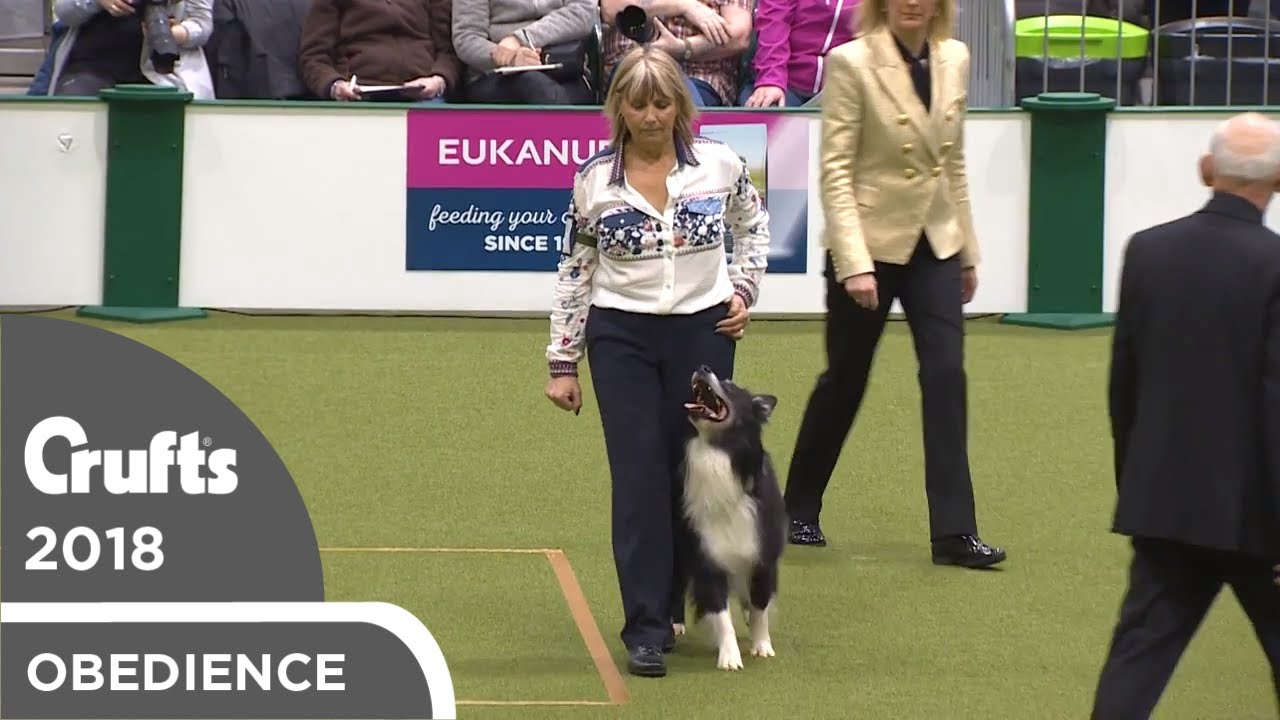 Obedience - Dog Championship - Part 1   Crufts 2018