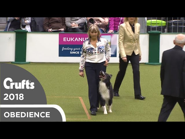 Obedience - Dog Championship - Part 1 | Crufts 2018