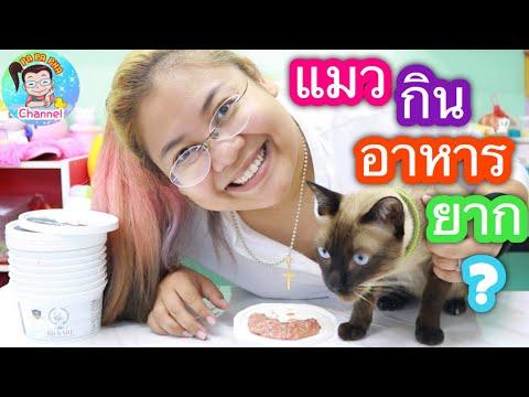 แมว กินอาหารยาก ทำยังไงดี? l By แมวปาปาภา