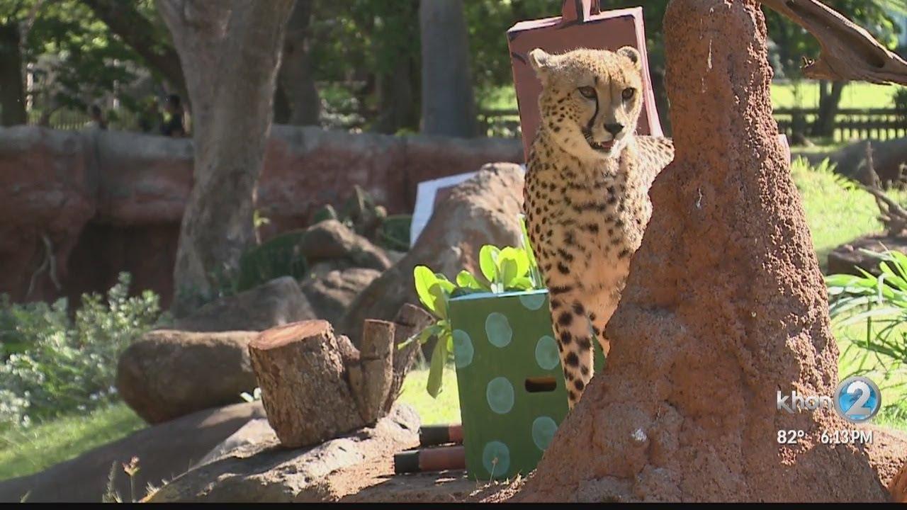 Animals at the Honolulu Zoo celebrate Christmas - YouTube