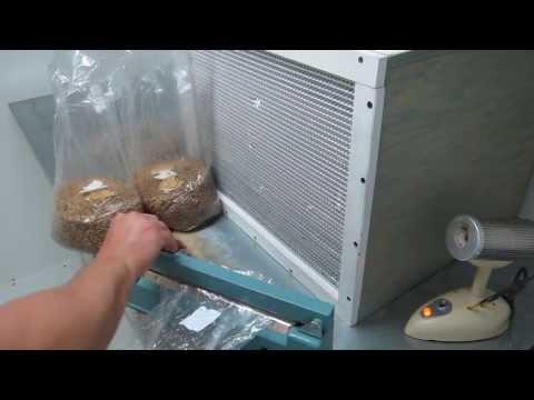 Transferring mycelium on agar to grain