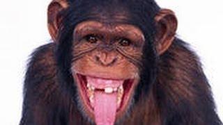 Конечно, смех - лучшее лекарство! Но не при поносе...(, 2014-04-11T15:22:15.000Z)