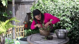 How to Harvest Red Leafy Lettuce : The Chef's Garden