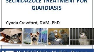 shelter medicine giardia