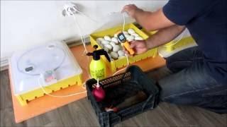 Инкубация гусиных яиц:Мои помощники в инкубации(Инкубация гусиных яиц:Мои помощники в инкубации:Подключиться к партнёрской программе и зарабатывать деньг..., 2016-06-14T17:15:57.000Z)