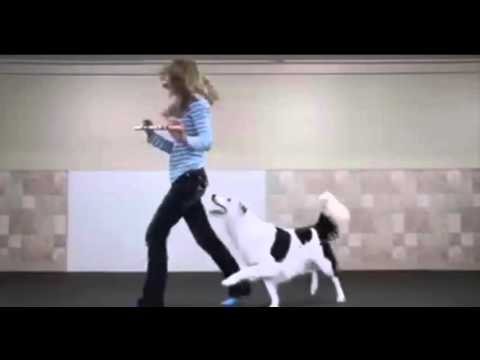 Girl is dancing with her dog
