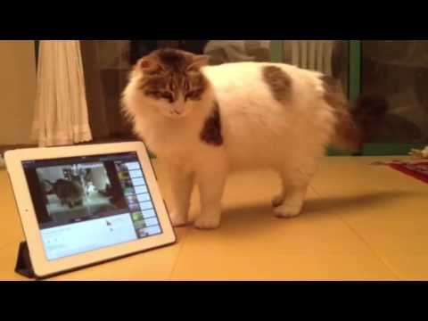 China Chat Cat