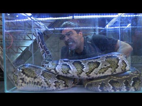 BASTIDORES L Prova Dos Casais Tem Cobras, Baratas E Lagartos