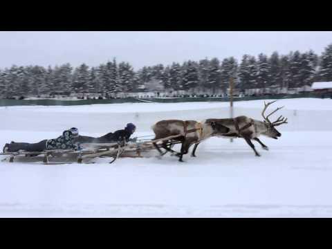 Reindeer Race In Jokkmokk
