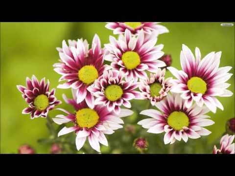 Sahaja Yoga Music- Nirmala Kiti Varnavi