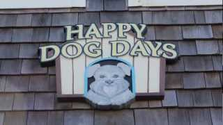 Happy Dog Days #1112  L  Semi-oceanfront Home In Nags Head,nc  L  Outer Banks