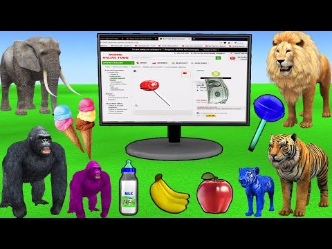 Learn wild Animals Online Shopping For Kids Buying Groceries   Kids Pretend Play Toys Learn Colors