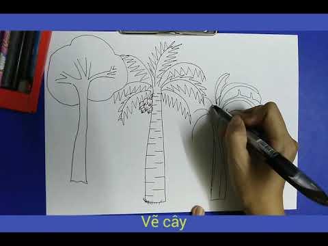 Vẽ cây