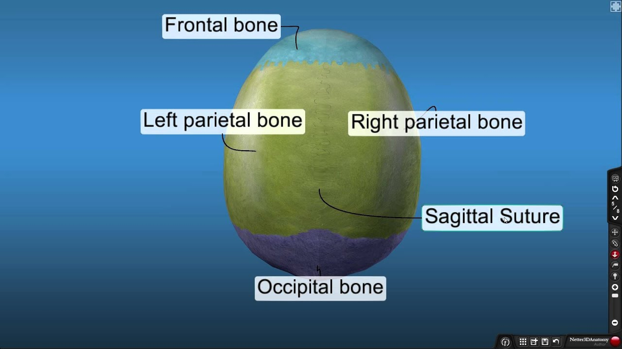 Netter 3D Anatomy Overview Video - YouTube