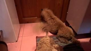 и как пудели в кошачью дверцу выходят...:)