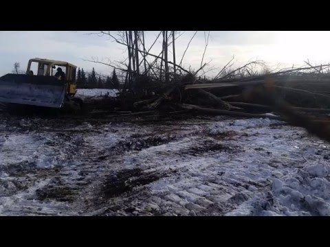 CAT D6C KNOCKING DOWN TREES