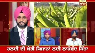 ABP SANJHA AGRICULTURE SPECIAL: Turmeric cultivation: Boon for Punjab farmers