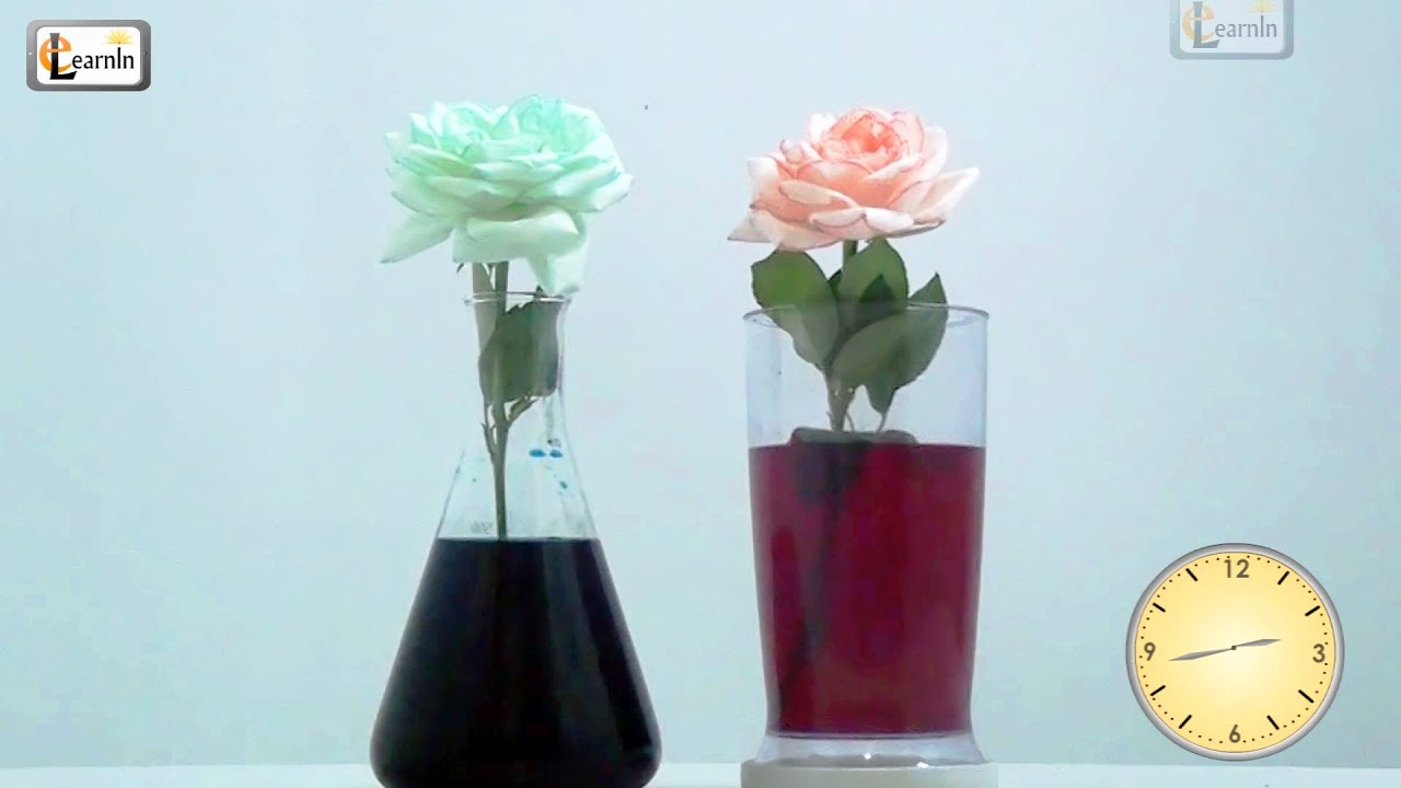 Colored Flowers | Color Changing Flower Experiment | Science Experiments  For Kids | Elearnin   YouTube