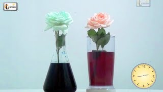 Colored flowers | Color changing flower experiment  | Science experiments for kids | Elearnin