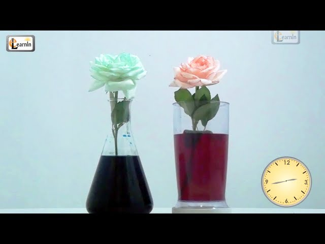 Color Flowers With Food Coloring Colored Flowers | Color