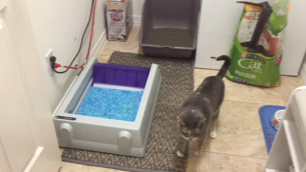 Automatic Cat Litter Box For Multiple Cats Reviews