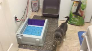 SS014 Review ScoopFree Automatic Litterbox