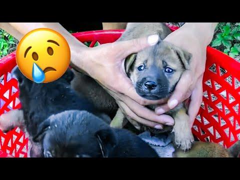 10 Marvelous Animal Rescues