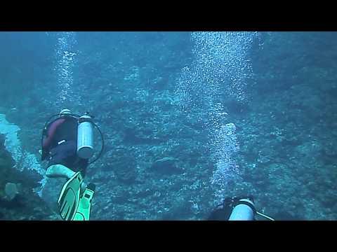 100' Black Rock Drop Off Dive Grand Cayman