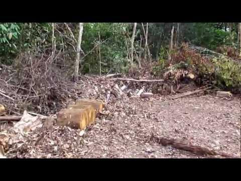 gold mine guyana