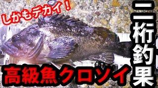 高級魚クロソイが爆釣!二桁釣果達成!【ヒットシーンあり】