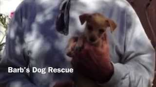 Barb's Dog Rescue - Barb's Two bit