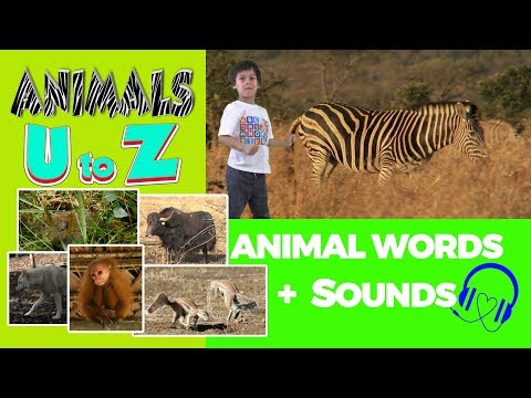Animal Sounds 🎧 Animal Starting With U,V,W,X,Y To Z | Animal Words Beginning With Letters U To Z