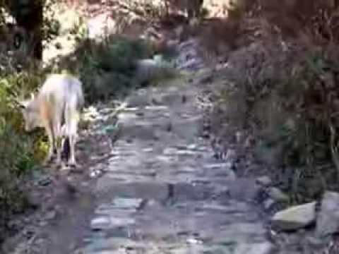 Mahavatar Babaji Cave (Himalayas, INDIA)